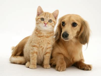 worldwide puppies and kittens pictures of puppies and kittens together pets world