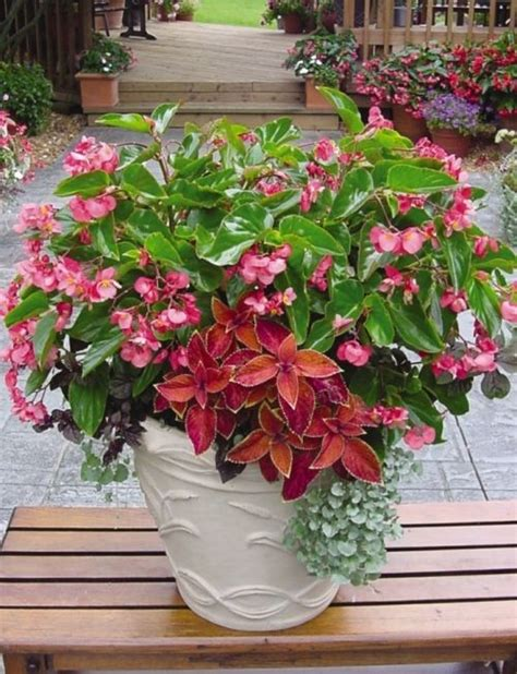 Design For Potted Plants For Shade Ideas 17 Best Images About Container Garden On Window Boxes Container Plants And Fall