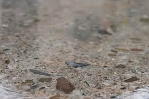Patio Slab Sealer Wet Look Concrete Finishes Apps Directories