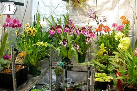 growing orchids successful gardening indoors and out an illustrated encyclopedia and practical gardening guide books indoor orchid grow room plant propaganda
