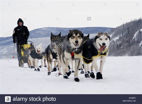 how do mushers their dogs for the iditarod tis the season tuesdailies runner s world community