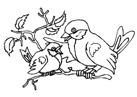 bird pictures to color pictures to colour birds
