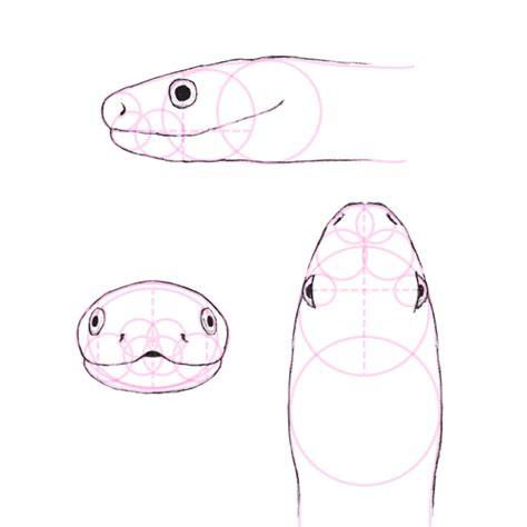 tutorial python nose how to draw animals snakes and their patterns