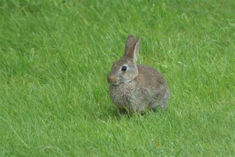 jardin de la sauvagine quot lapins land quot un coin pour
