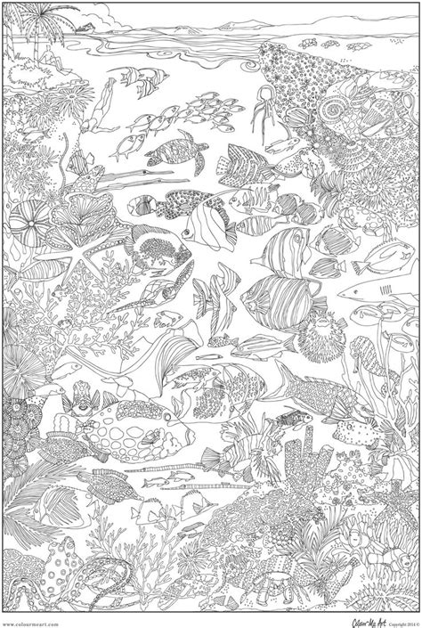 great barrier reef coloring pages bing images aquatic