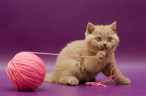 String Cat - creative ideas to diy your cat toys feed my