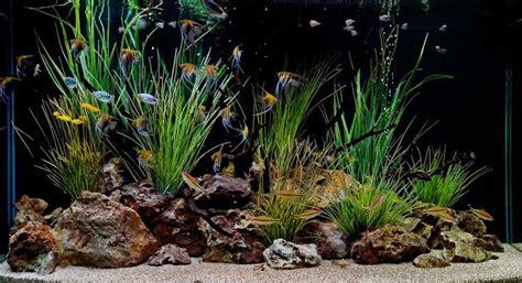 how to aquascape a freshwater aquarium interior beautiful and awesome aquarium aquascape designs