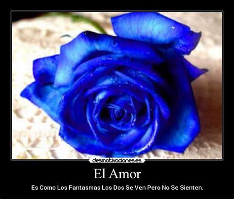 imagenes de rosas azules con frases de amor imagenes rosas azules con frases imagui
