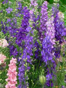 visit my garden favorite annual flowers from seed