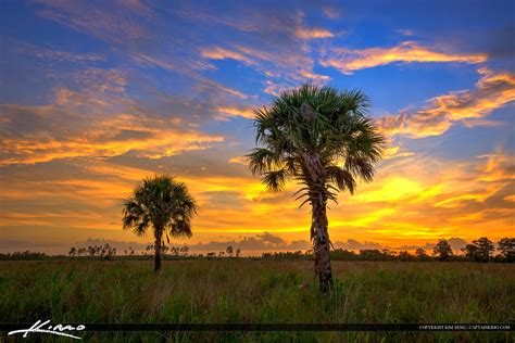florida landscape hdr photo pine glades natural area