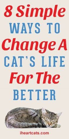 Ways To Change Your For The Better by Cats On White Cats Black Cats And Kittens