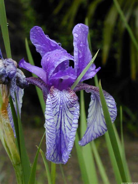 es un gnero con alrededor de 110 especies de la familia de las 10 tipos de flores imagenes taringa