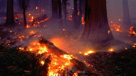 forest fire wallpaper  images