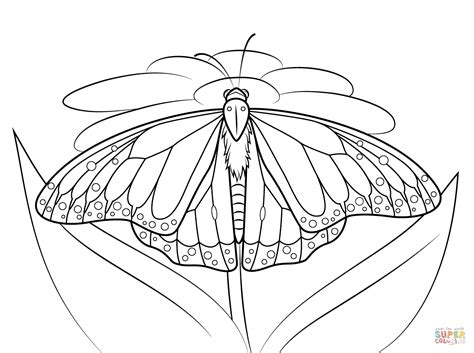 monarch butterfly coloring pages free monarch butterfly sits on a daisy coloring page free