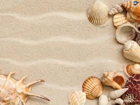 shell wallpaper seashells wallpaper 25