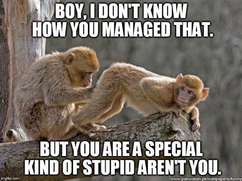 Monkey Meme - funny monkey butt www pixshark com images galleries