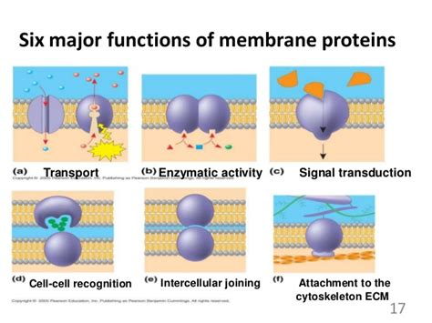 6 proteins in cell membrane cell membrane and transport