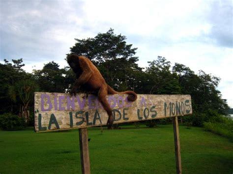 la isla de los 843390583x la isla de los monos iquitos peru address phone number reviews tripadvisor