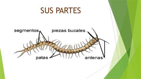 capacitor y sus partes miriapodos