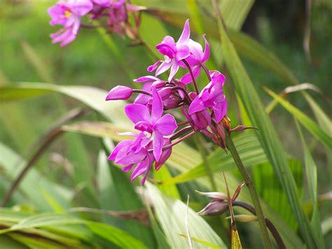 Pot Anggrek Dinding menanam angrek dengan media tanah di pot mang yono