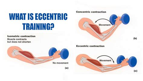 what is eccentric fitness workouts exercises