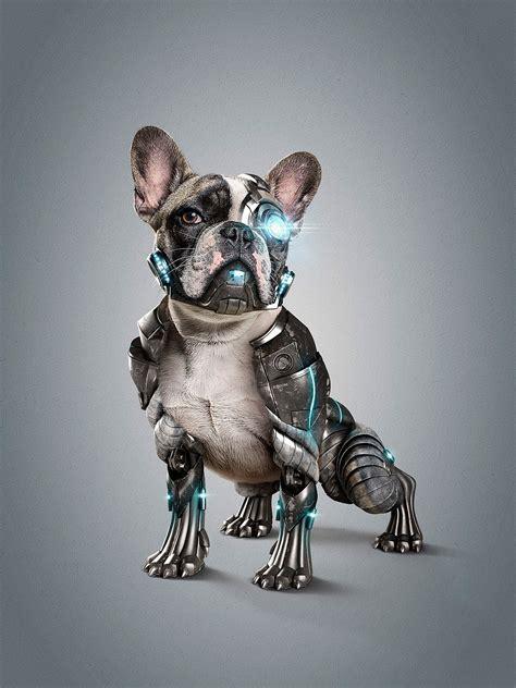 cyber dog  studionuts  behance