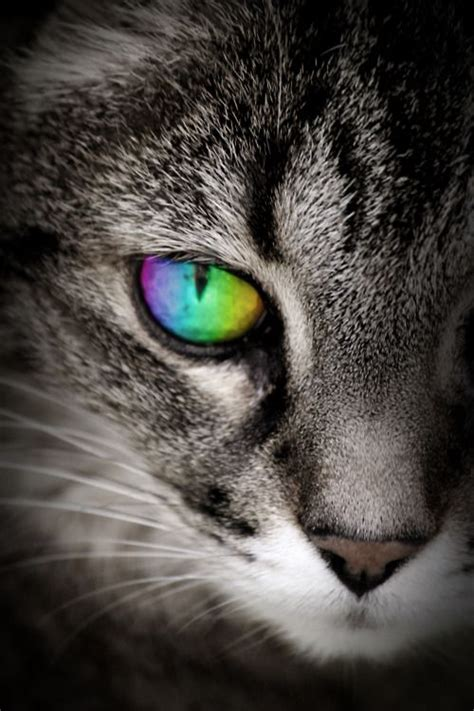 coolest eye colors 17 best ideas about cat on blue eyed
