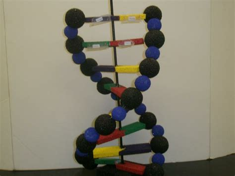 dna craft project dna helix model project ideas search