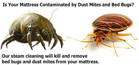 can you smoke bed bugs ottawa mattress cleaning services ottawa homes services