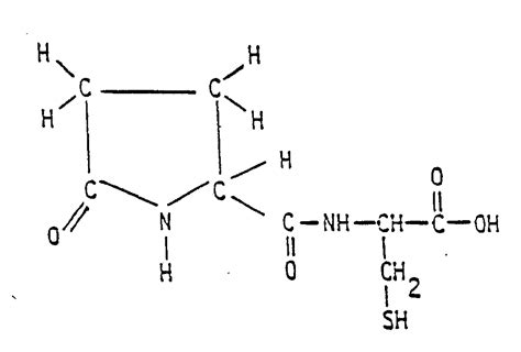dipeptide diagram dipeptide sketch templates