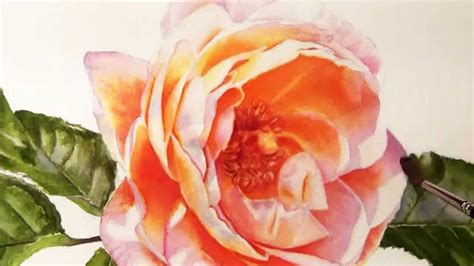 how to paint realistic stunning flowers watercolor dvd