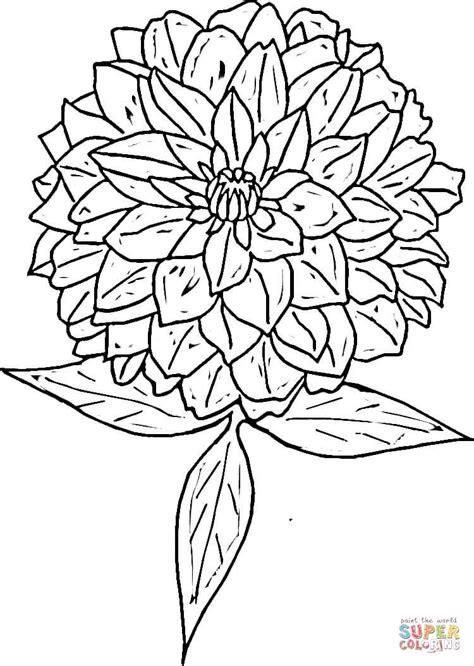 coloring pages zinnia zinnia coloring page free printable coloring pages