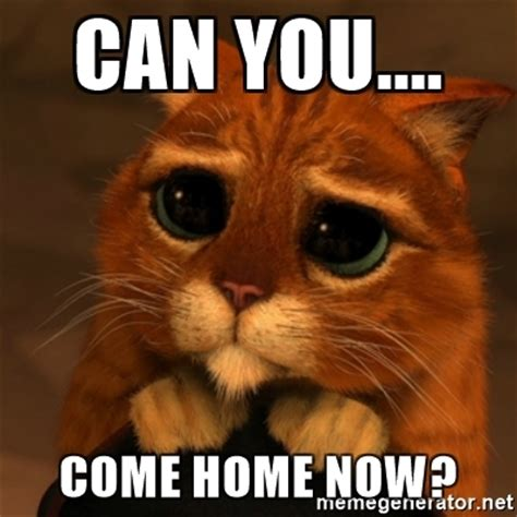 can you come home now shrek cat v1 meme generator