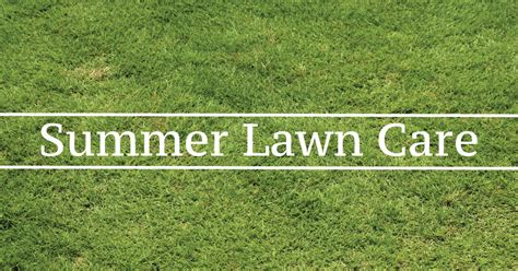summer lawn care tips summer lawn care preparing your yard for summer green
