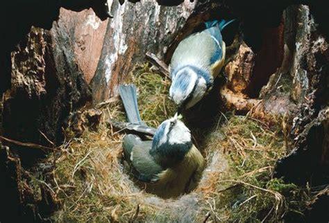 Jual Tempat Pakan Burung Liar gambar burung betina ternyata selingkuh klub blue