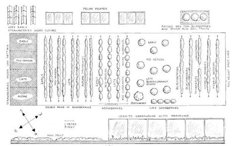 Fruit Garden Layout Planning A Soft Fruit Garden