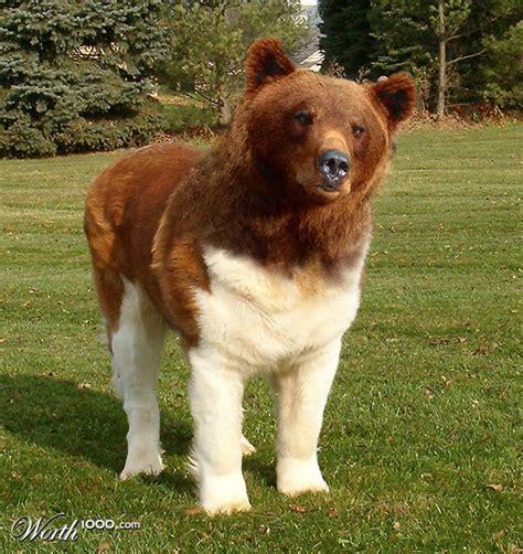 st bernard poodle puppies great dane st bernard mix hairstyles