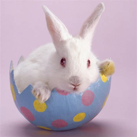 bunny d inkspired musings bunny fever