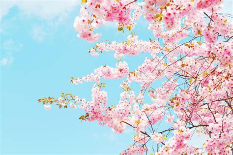 ba type1 jpeg 에피톤프로젝트 봄날 벚꽃 그리고 너 악보와 가사 벚꽃 봄감성 이미지 네이버 블로그