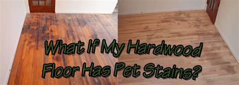 What if My Hardwood Floor has Pet Stains?   Natural Accent