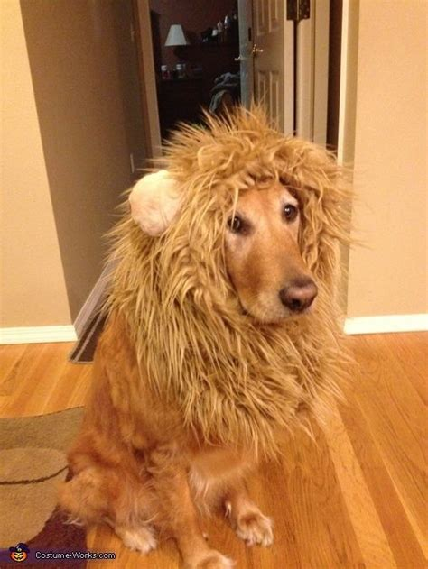 golden retriever costume for humans best 25 costumes ideas on costumes