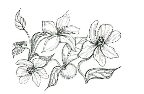 orange blossom flower drawing sketch coloring page view