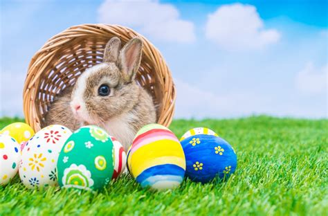 easter facts why easter is called easter and other little known facts