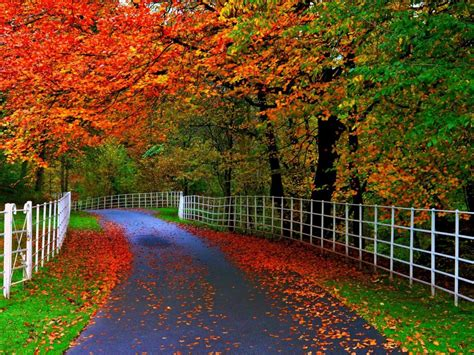 forests parks trees leaves roads fences natural beauty