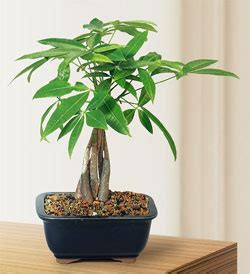 money plant in bathroom feng shui bathroom plants for health wealth luck