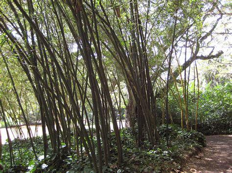 National Botanical Gardens Kauai Photo