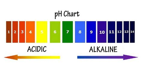 labelled diagram of ph meter how your ph determines your overall state of health renewed living inc
