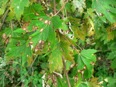 common tree diseases greenvsgrey