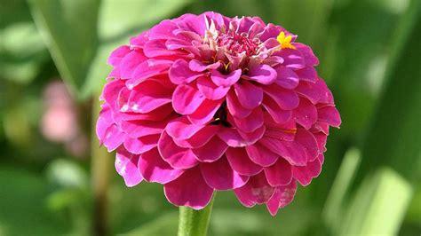 il valzer dei fiori valzer dei fiori