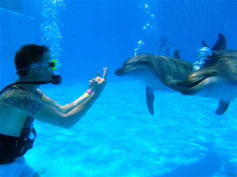 how to become a service trainer how can i become a dolphin trainer for a day at dolphinaris